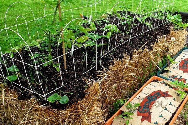 5 jó megoldás városi kertészkedéshez | Életszépítők