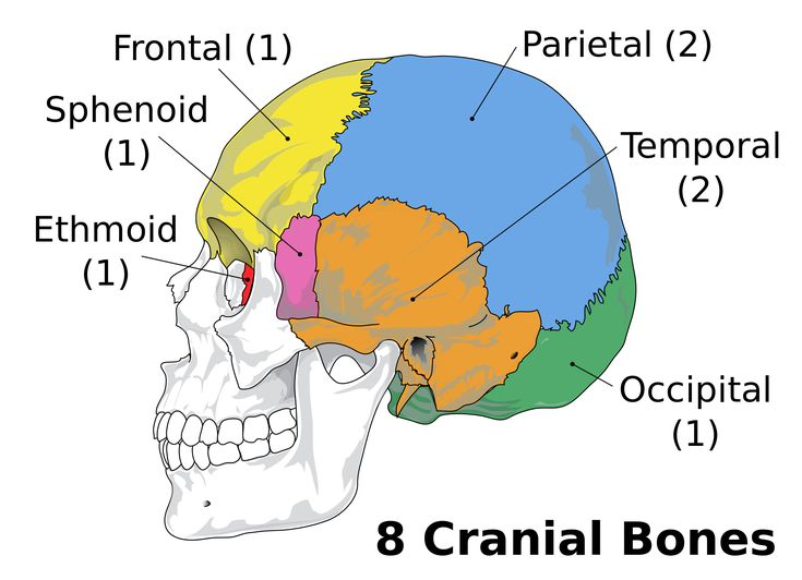 Bioengineered Cranial Bones With Multiple Intelligent Functions For The Effective Treatment Of Currently Intractable Brain Disorders Prospects And