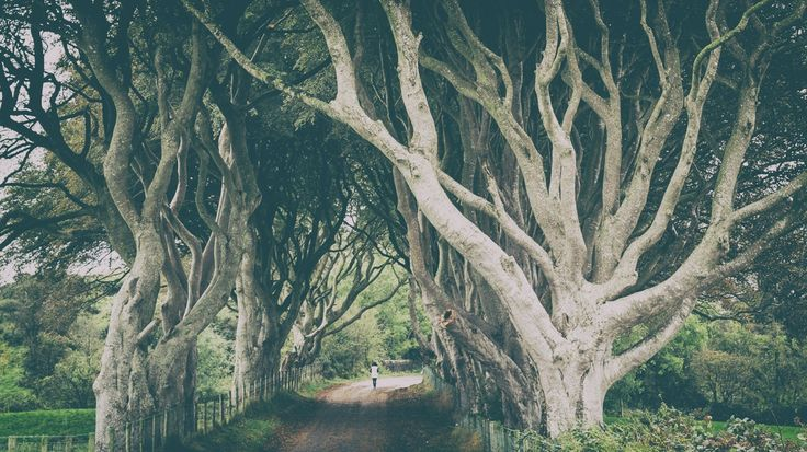 King's Road (The Dark Hedges) by Binaire  on 500px