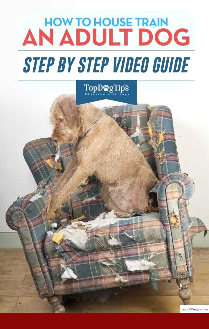 How To Train A Dog To Run With You And Pics Of Zoomer Dog Training