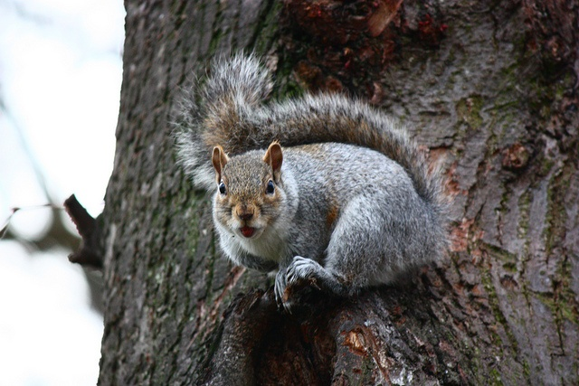 January 21st is Squirrel Appreciation Day