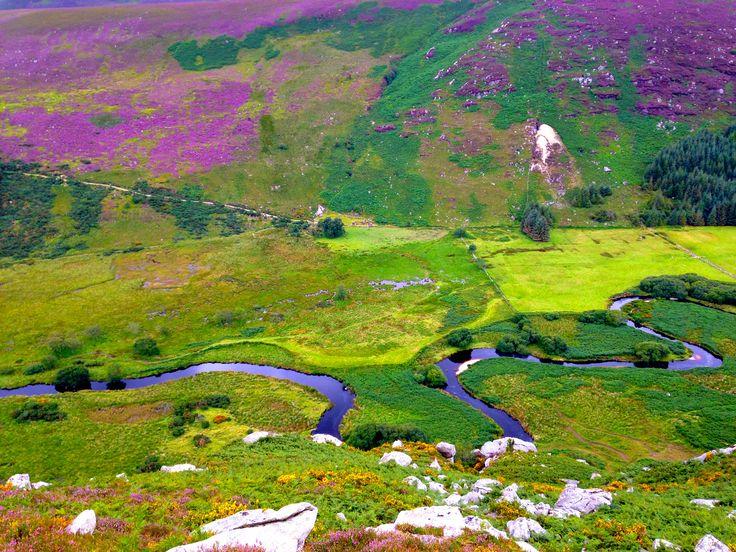 Wicklow Way - Day 4, Lough Dan to Glencree