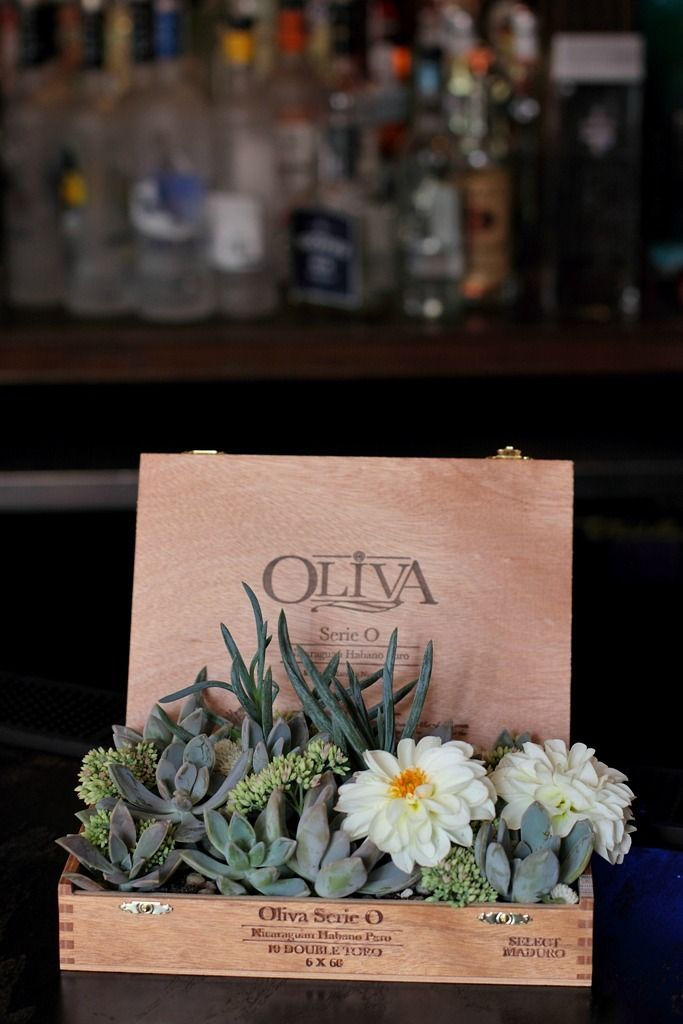 Succulents planted in a cigar box (or similar)