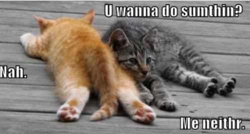 cute captions 15 Funny Animals Are Even Funnier With These Captions (27 Pics)