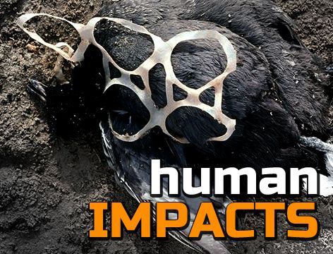 FREE Teaching resources for 14-16 year olds: Human Impacts on the Environment Students will learn about how humans can have negative impacts on the environment and endangered species. They will be asked to consider how human impacts can be measured, and what can be done to help. http://www.arkive.org/education/teaching-resources-14-16#resourceHumanImpacts1416