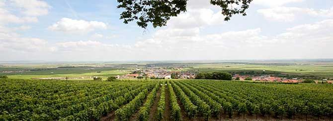 The village's vineyards are located in the Côte des Blancs subregion of Champagne, and are classified as Grand Cru (100%) in the Champagne vineyard classification. On wine labels its name is often shortened to Le Mesnil. A Clos-type vineyard in the village is the source of Krug's Clos du Mesnil.