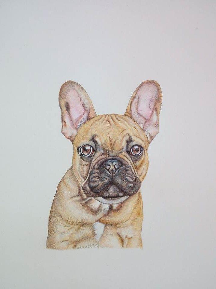 Artigiano: Simona BrecciaRitratto di Bulldog Francese. Realizzato con Tecnica Mista, acquerello e pastello, su carta 20 x 30 cm.