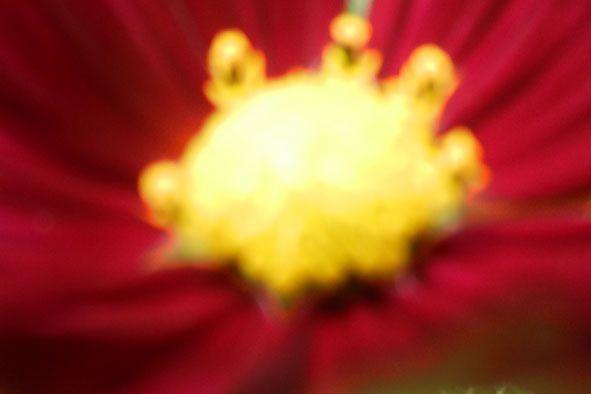 Garden flowers - Extreme closeup - 803