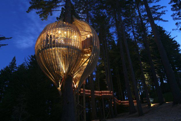 The Yellow Treehouse Restaurant - Auckland, New Zealand: Yellowtreehouse, Tree Houses, Trees, Newzealand, Place, Treehouses, New Zealand