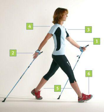 Infografik, Technik, Nordic-Walking