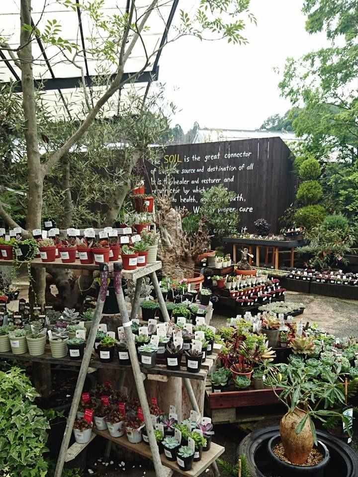 Spring Week End Sale Of Propagated Herbs Garden Center Displays