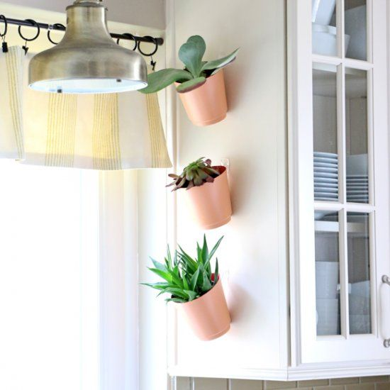Create a vertical succulent garden for your kitchen with Command Hooks! If you decide you don't like them, you can always remove them!