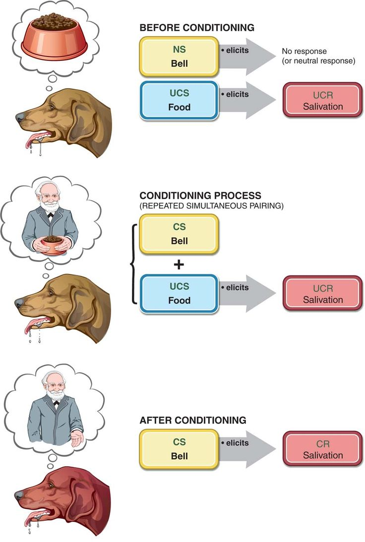 classical conditioning experiment Example: ivan pavlov first demonstrated classical conditioning by ringing a bell ( the neutral conditioned stimulus) just before feeding his dogs (food being the.