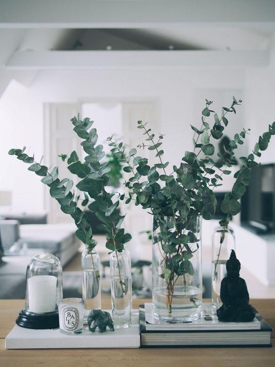 Gesunder Hingucker zu Hause: Eukalyptus – #Eukalyp…