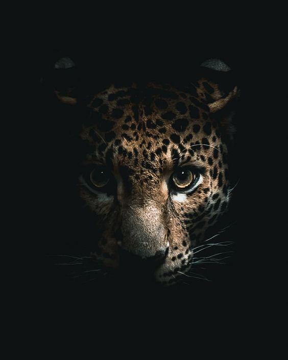النمر نمر صور نمور طريقة حيوان حيوانات صور نمر النمر الوردي صور نمور صور النمر قناة النمور أسد ضبع الغابة صور نمر الاسود سوريا صور الن Cat Dark Cat Attack Cats