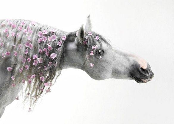 Equestrian Photography : Svetlana Petrova