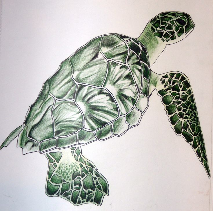 24 best Sea Turtles images on Pinterest Sea turtles Drawings