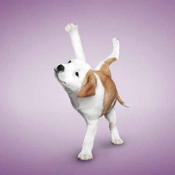 Super cute dog yoga