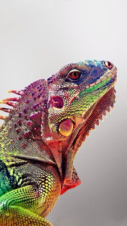 Love this, have it as a wallpaper for my 12.9 iPad screen, rainbow skin.