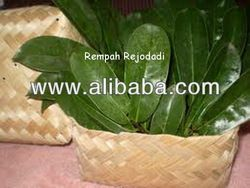 Specifications  Benefits of soursop leaf turned out 1000 times more powerful content and its ability of chemotherapy in treatin