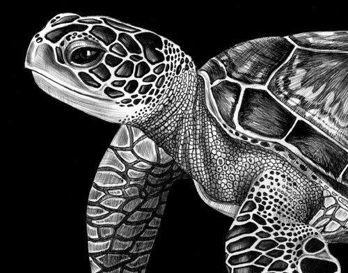Sea Turtle Ink Drawing van TimJeffsArt op Etsy https://www.etsy.com/nl/listing/165627396/sea-turtle-ink-drawing?ref=related-0