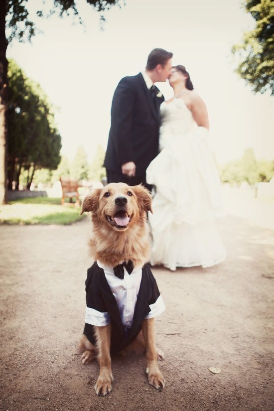 I want 1 pic like this at our wedding- minus the clothes on the dog