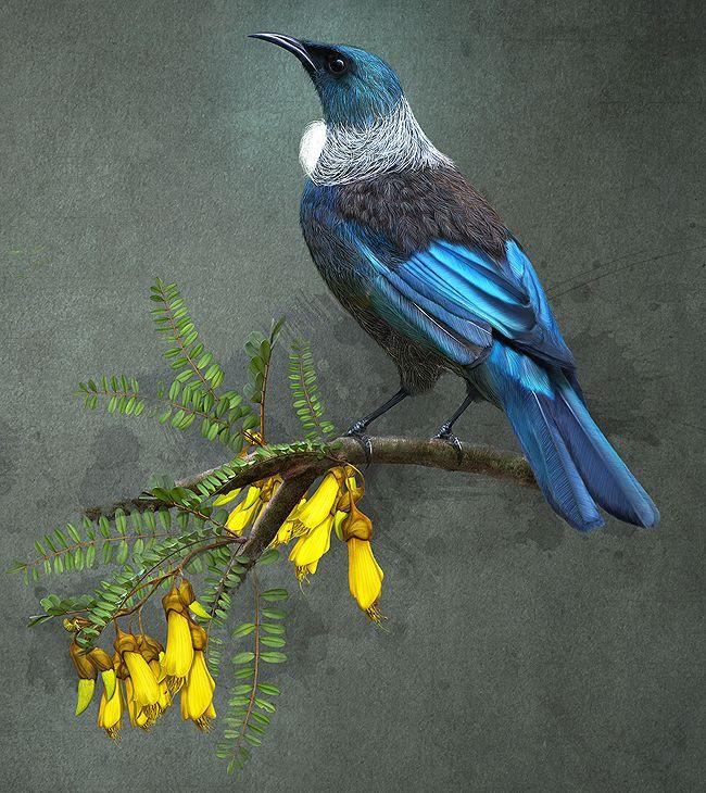 NZBirds-MAIN1.jpg (650×730)