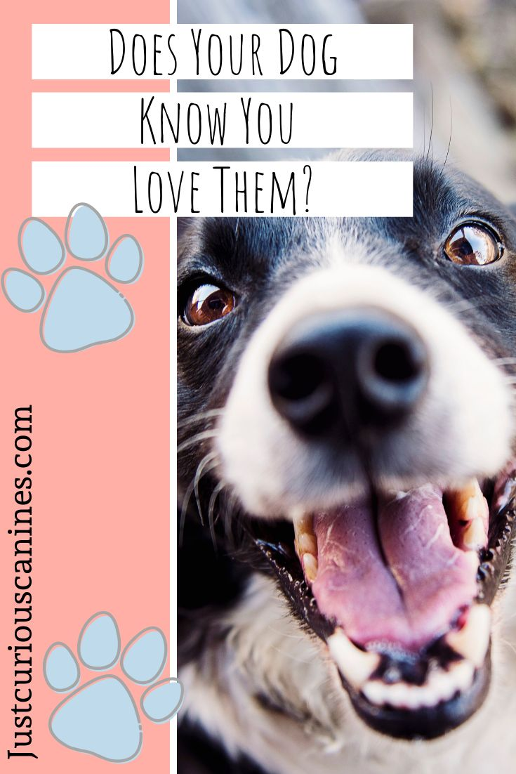 Does your dog know you love them heres how to tell them