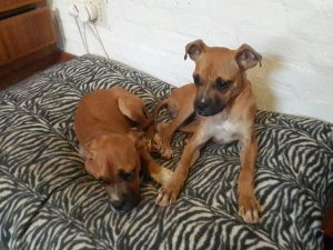 Do you have a home for these sisters?