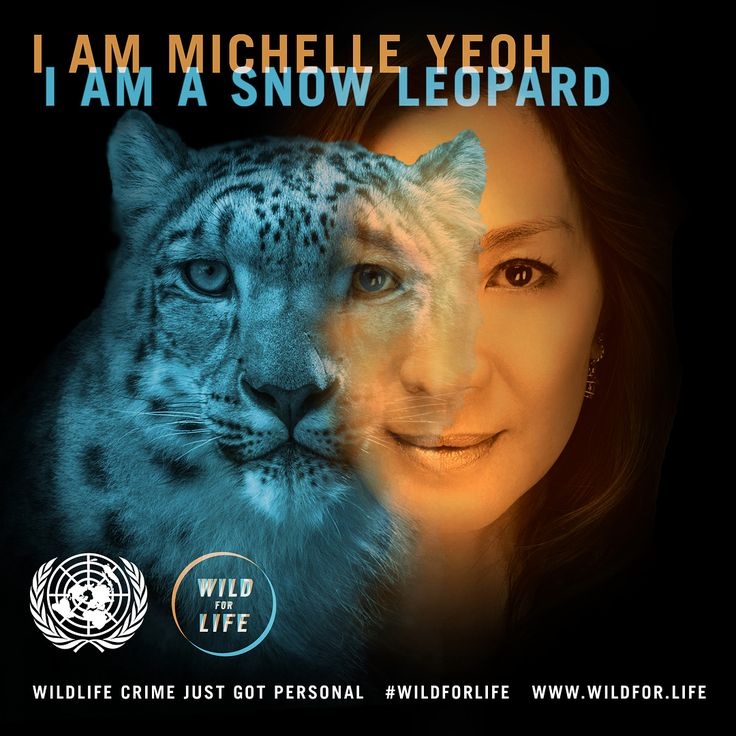 Without our help, the snow leopard may disappear. Climate change, poaching, habitat destruction and killing by livestock owners are threatening this incredible species, which acts as an anchor of mountain ecosystems. It's time to raise our voices in support of the snow leopard. That's why I'm joining the @unitednations #WildforLife campaign and giving my name to change the game for this amazing cat. Find out your kindred species and go wild for life at wildfor.life @undp @unenvironment…