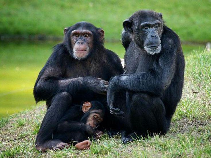 ¿Monogamia?   Reflexiones de un primate