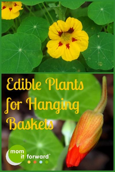 10 Edible Plants for Edible Landscaping in Hanging Baskets and Containers
