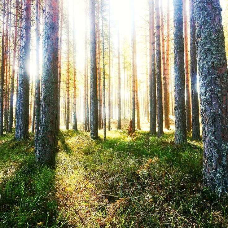 Finnish forest is magical