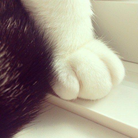 hand_cat14