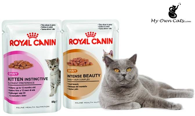 Pin By Jhonson Grey On Myowncats Best Cat Food Wet Cat Food Canned Cat Food