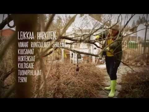Puutarhan kevätleikkaukset - Videot - Yhteishyvä