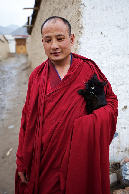 猫和喇嘛/ Lama with his cat, photo by randomix, via Flickr