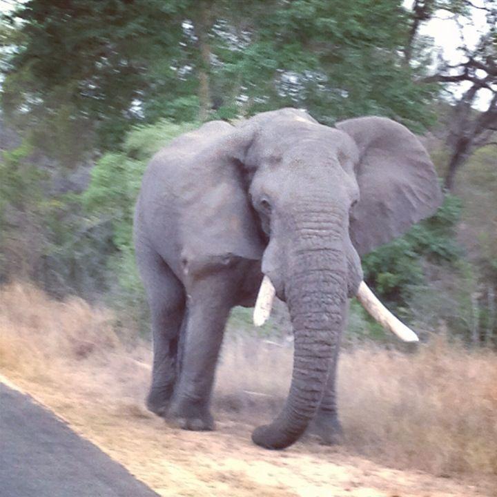 Kruger Park Orpen Gate