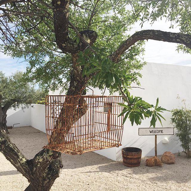 Free as a bird. Follow us on Instagram @joandso