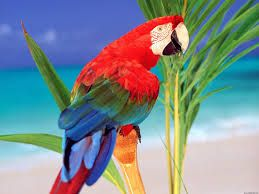 A red parrot hanging on a branch