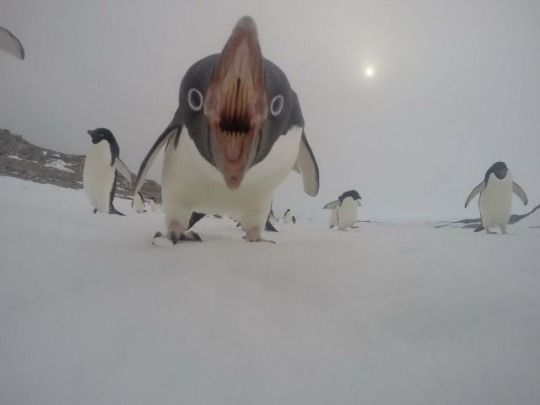 Whoa. Penguin mouths are truly frightening.