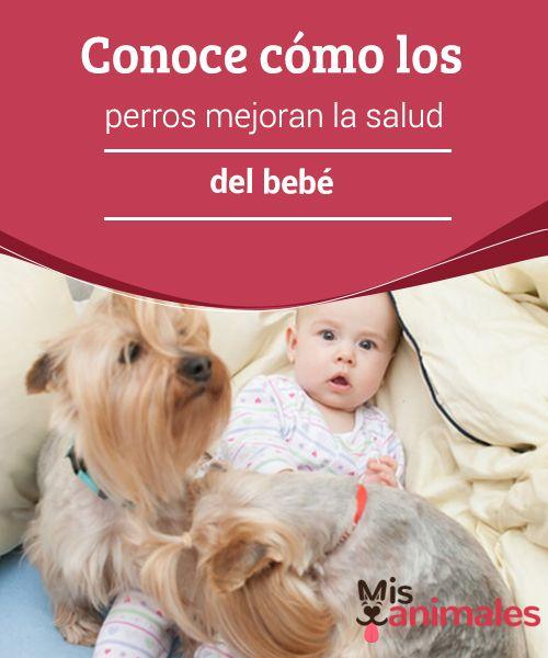 Conoce cómo los #perros mejoran la salud del #bebé  Algunas parejas con #mascotas se ven en la #incertidumbre de qué hacer con su perro cuando ella se queda #embarazada. Lo cierto es que es tan solo un mito el #pensar que un bebé no puede nacer en un hogar en el hay #animales. Es más, todo lo contrario, los perros mejoran la salud del bebé.