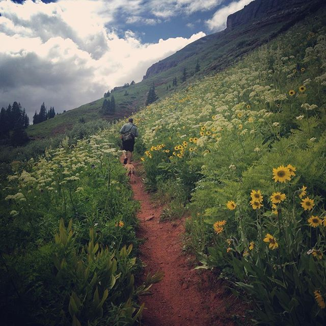 1000+ Images About Durango Wildflowers On Pinterest