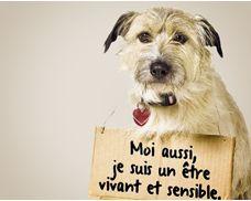Attentats à Charlie Hebdo : la cause animale perd de fervents défenseurs - Fondation 30 Millions d'Amis