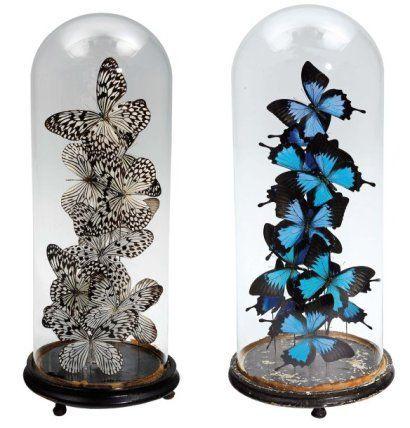 Envols de papillons sous globes Napoléon III