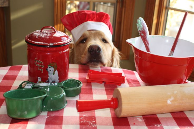 Can I help you bake Christmas cookies? http://www.pinterest.com/debbiehenley/puppy-love/