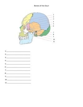 1000+ images about Anatomy Identification for Anatomy ...