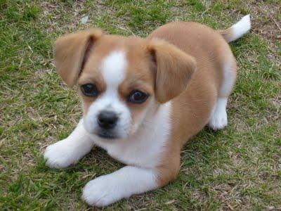... Mixed Pup, Shih Tzu, Hypoallergenic Dogs, Mixed Breeds, Animal, Tzu