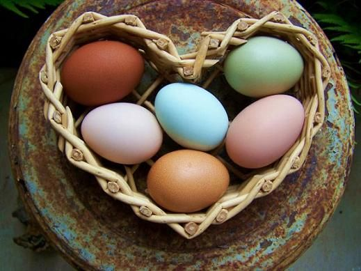 i am newly obsessed with the fact that chickens can lay colorful eggs.  i now want chickens that lay blue eggs.