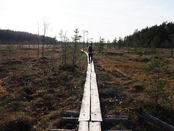 Pyhä-Häkin kansallispuisto / Kaikki on hetken tässä http://www.stoori.fi/kaikkionhetkentassa/pyha-hakin-kansallispuisto/